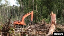 Penebangan hutan di Kuala Tripa, Nagan Raya, Aceh. (Foto: Dok)