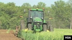 Petani organik dan konvensional harus bersatu untuk dapat memberi makan dunia. (Photo: VOA)