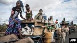 Les éleveurs peuls porte des agneaux dans leurs charrettes alors qu'ils se déplacent vers le nord à Barkedji, le 21 juillet 2020.