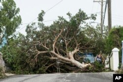 An area resident attempts to pass a tree downed by the high winds of Hurricane Nicole, in St. Georges, Bermuda, Oct. 13, 2016.