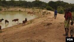 À procura de água. Namibe