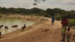 Governo cabo-verdiano anuncia plano de emergência frente a mau ano agrícola