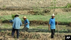 Farm workers in a field near the city of Udon Thani in Thailand's impoverished northeast, May 2010