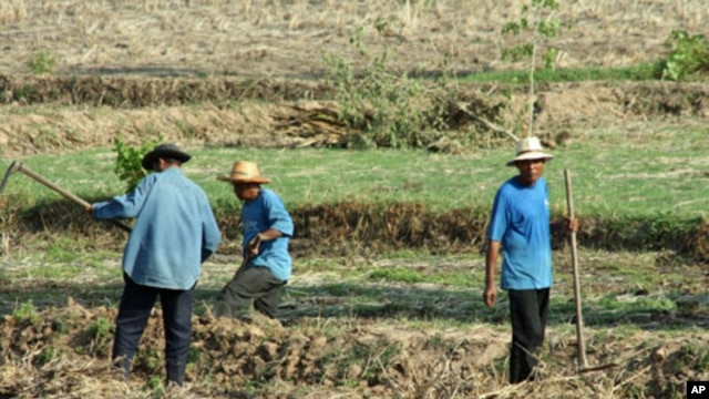 Farm workers in a field near the city of Udon Thani in Thailand's impoverished northeast, 14 May 2010