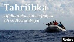 Tahriibka