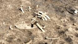 Morte de gado no Namibe provoca desavenças entre autoridades - 2:36