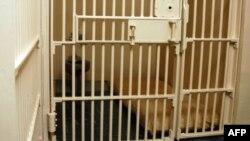 Les barreaux d'une prison (photo d'illustration).