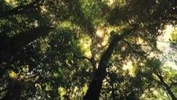 Cine: Un viaje salvaje