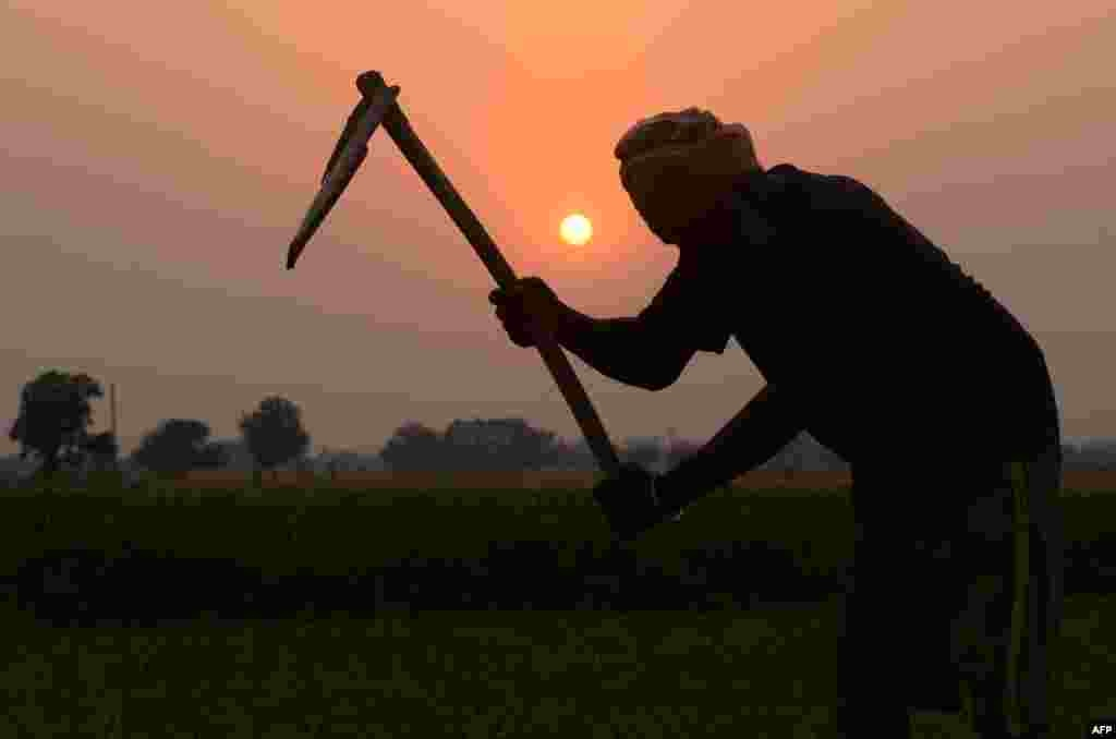 An Indian farmer works in a field on the outskirts of Amritsar.