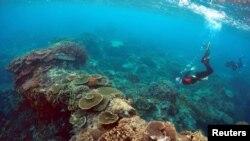 """Peter Gash (kiri), pemilik dan manajer Lady Elliot Island Eco Resort, memeriksa kondisi terumbu di sebuah area yang disebut 'Taman Karang"""" di Pulau Lady Elliot an 80 kilometer timur laut dari kota Bundaberg di Queensland, Australia, 11 Juni 2015. (REUTERS/David Gray)"""