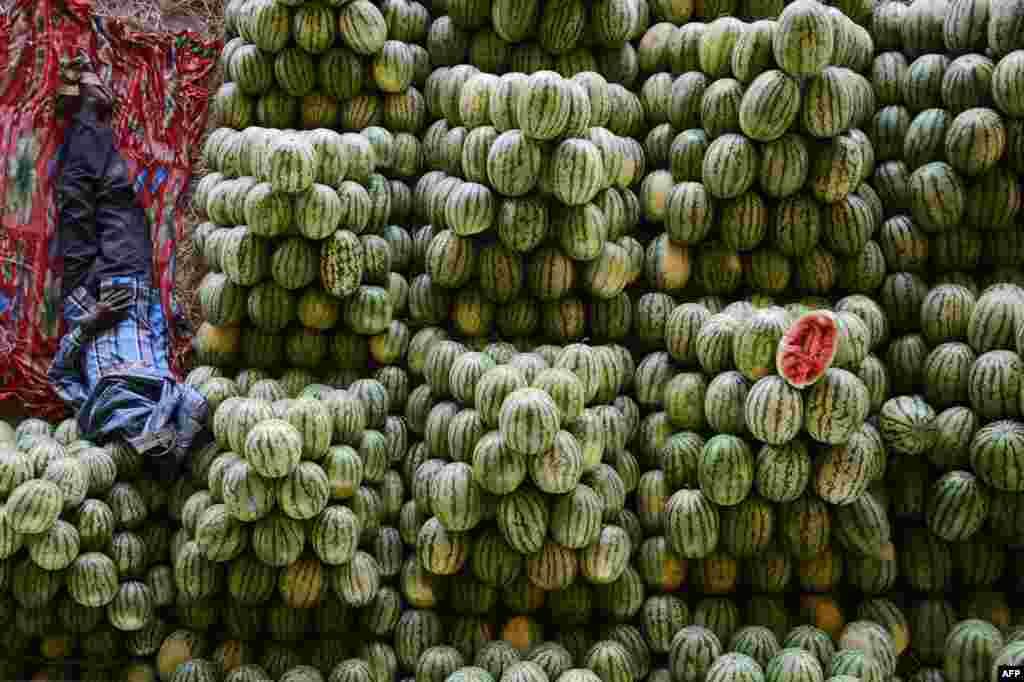 Một nông dân Ấn Độ nằm trên đống dưa hấu tại gian hàng trái cây của mình trước khi đem bán ở ở chợ bán sỉ trái cây Gaddiannaram ở ngoại ô Hyderabad.