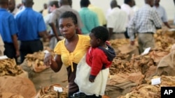 A woman and her baby walk past bags of tobacco early in the selling season in Harare. Zimbabwe thrived on tobacco and other farm exports until the government-instigated seizures, often violent, of white-owned commercial farms starting in 2000, (File)