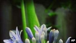 قدرتی پھولوں کو طویل عرصے تک تازہ رکھنا ممکن ہوگیا ہے