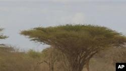 图为索马里人7月13日徒步逃离饥荒