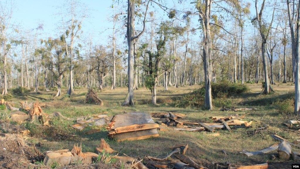 Pembangunan Pabrik Ancam Ekosistem Taman Nasional Baluran