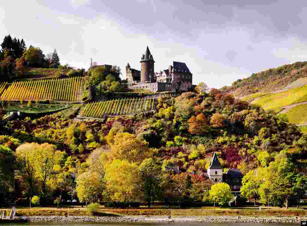 An old castle is seen above colorful trees and a vineyard that overlook the Rhine River near the village of Bacharach, Germany.