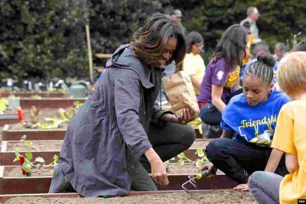 美国第一夫人白宫种菜推动全民健康(美国之音常晓拍摄)