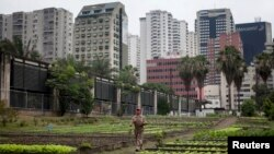 A farmer walks through an organic urban farm in Caracas, Venezuela. (Feb. 24, 2011)