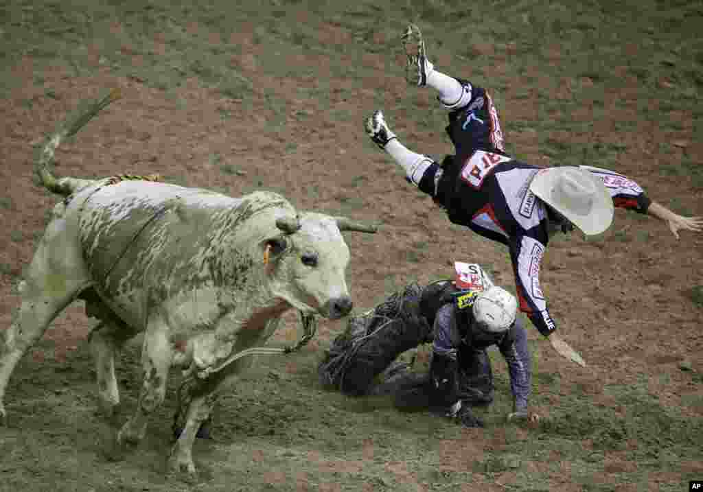 Bullfighter Chuck Swisher, top, gets tossed into the air by bull Cajun Smurf while he was protecting Bull rider Trey Benton III during the seventh go-round of the National Finals Rodeo in Las Vegas, Nevada, USA, Dec. 10, 2014.