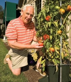 Unidentified man with an EarthBox being used to grow tomatoes