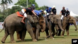Polo players, sitting behind mahouts as they guide elephants, compete for the ball during an elephant polo match in Bangkok, Thailand, March 9, 2017. The annual King's Cup Elephant Polo charity event raises funds for projects that better the lives of Thailand's wild and domesticated elephant population.