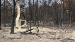 Central Texas Forest Struggles to Recover from Fires