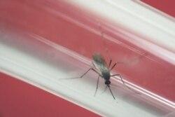 Caritas combate Zica em Cabo Verde