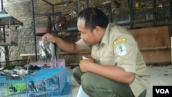 Petugas bandara Solo memeriksa kondisi burung ilegal hasil sitaan. (VOA/Yudha Satriawan)