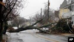 طوفانی جھکڑوں کے باعث مشرقی ساحلی ریاستوں میں ہزاروں درخت گرنے کی اطلاعات ہیں جن سے املاک کو بھی نقصان پہنچا ہے۔