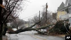 Drveće isčupano iz korjena blokira stambenu četvrt u Swampscott, Massachusetts, nakon što je palo na kablove za prenos električne energije, izazvaši nestanak struje, 2. marta 2018.