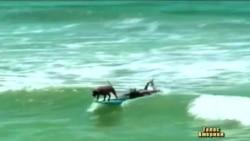 Пес-серфінгіст