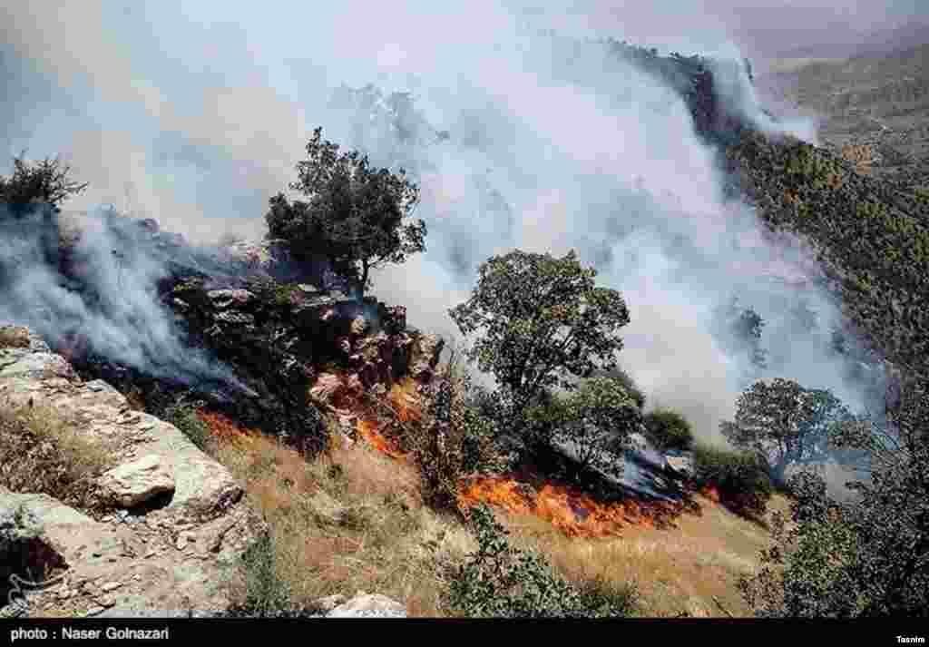 آتش سوزی در جنگل های ایوان - ایلام عکس: ناصر گل نظری