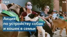 Спасая собак, они спасают людей