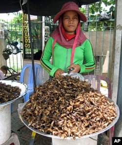 Insect merchant in Cambodia