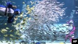 Proučavanje ponašanja jata riba dosta govori o ponašanju čoveka u grupi.