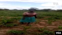 Nzara Yotekeshera muMasvingo