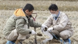 ژاپن ممکن است شعاع منطقه تخليه اتمی را افزايش دهد