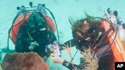 Los investigadores estuvieron estudiando la vida marina y recogieron muestras de un arrecife de coral.