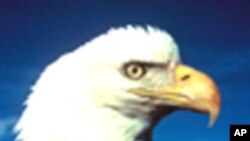 شکار با عقاب در قزاقستان
