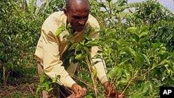 Agricultor de Café