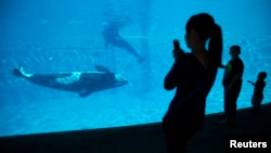 FILE - Visitors get a close-up view of an Orca killer whale during a visit to the animal theme park SeaWorld in San Diego, California, March 19, 2014.