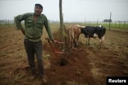 FILE - Farmer Juan Hernandez prepares the land to plant tobacco at a tobacco farm in Cuba's western province of Pinar del Rio, Jan. 26, 2016.