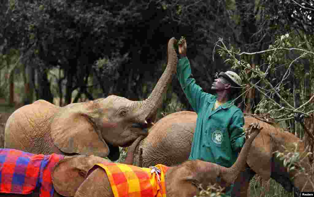 A zoo keeper feeds a baby elephant at the Nairobi National Park in Kenya.