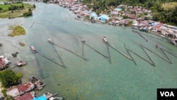 Pagar Sogili, sebuah tradisi turun temurun oleh masyarakat setempat menangkap ikan Sidat di aliran sungai danau Poso. (Foto: VOA/Yoanes)Litha