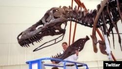 世界最受歡迎恐龍在芝加哥菲爾德博物館改頭換面