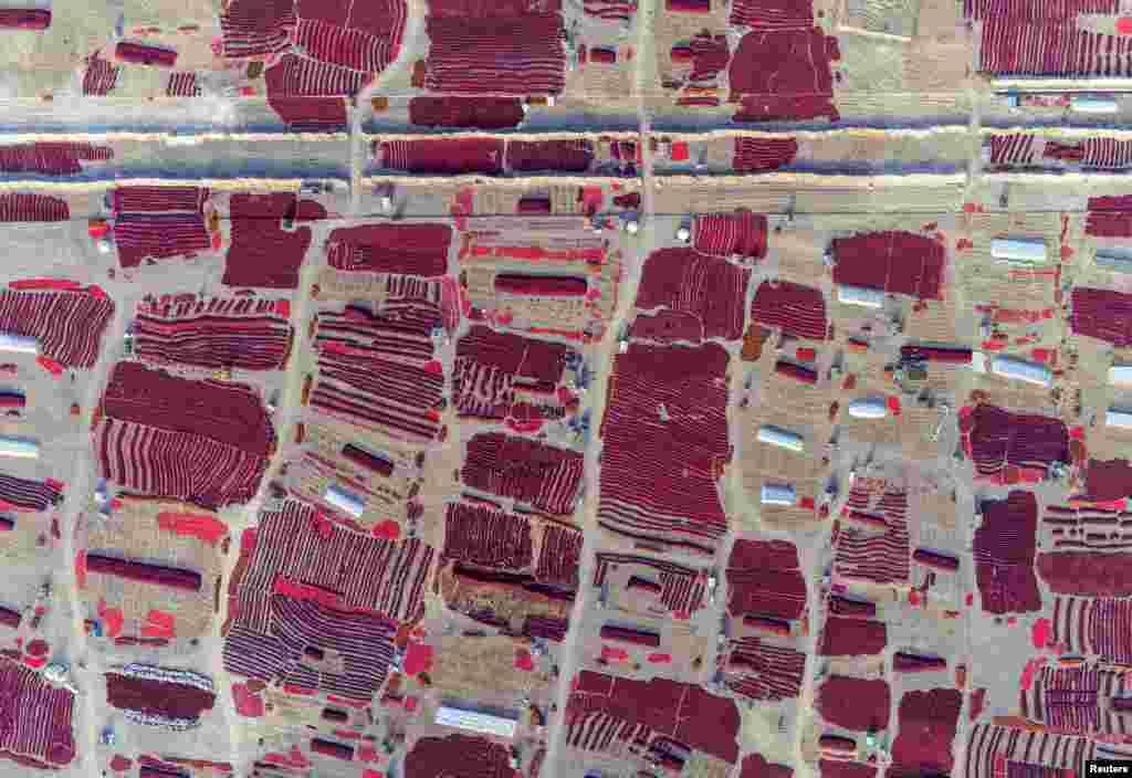 Çin - Sincan vilayətində qırmızı bibər tarlaları