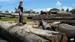 อินโดนีเซียสั่งห้ามถางป่า 2 ปีเพื่อฟื้นฟูสภาพป่าและลดปัญหาภาวะโลกร้อน