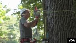 工作室学员学习修建树屋