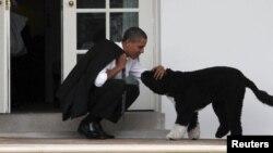 Bo fue educado por los entrenadores caninos del senador Kennedy.