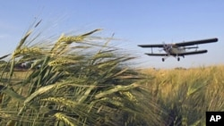 An airplane treats winter wheat crops with chemicals to kill destructive insects in the town of Mozdok in North Ossetia, Russia, June 8, 2011